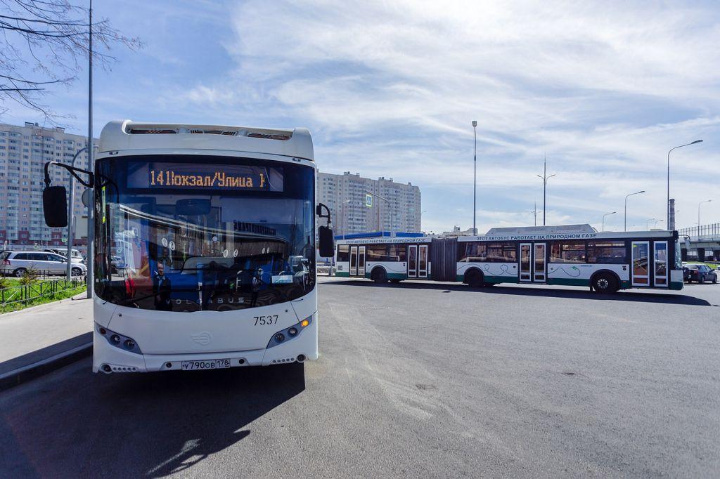 эко-автобусы