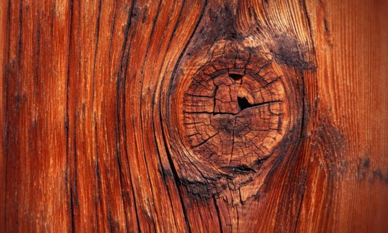 пороки_дерева